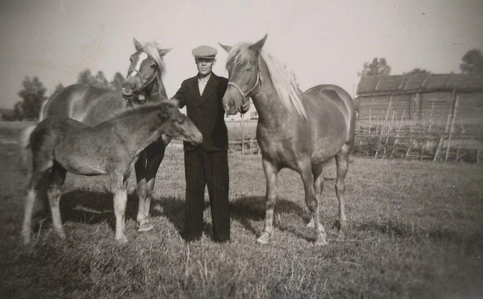 Lennart Grans med 2 hästar och ett föl.